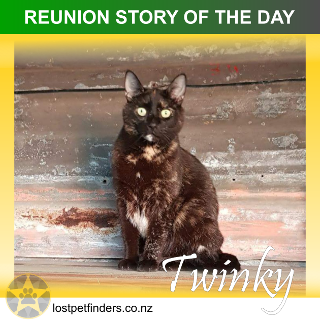 lost cat found Wanganui new zealand reunion