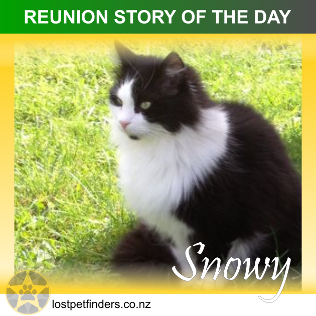 lost cat found reunited auckland new zealand